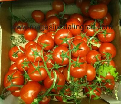 Tomate grappe  (500 g)